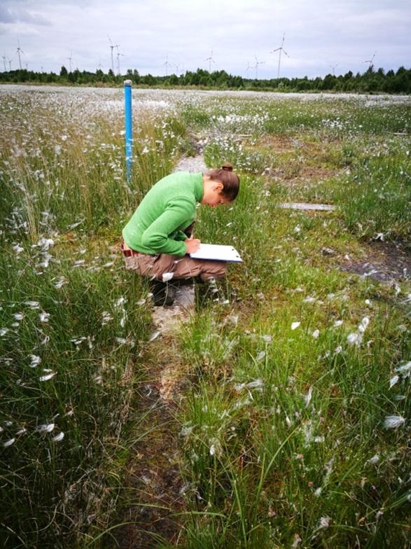 Botanikerin Amanda Grobe vom Institut für Umweltplanung , Leibniz Universität Hannover, untersucht die Vegetationsentwicklung in der Paludikultur.